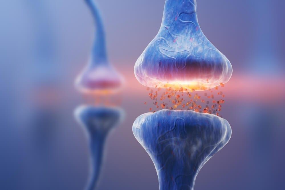 Understanding Neurotransmitters